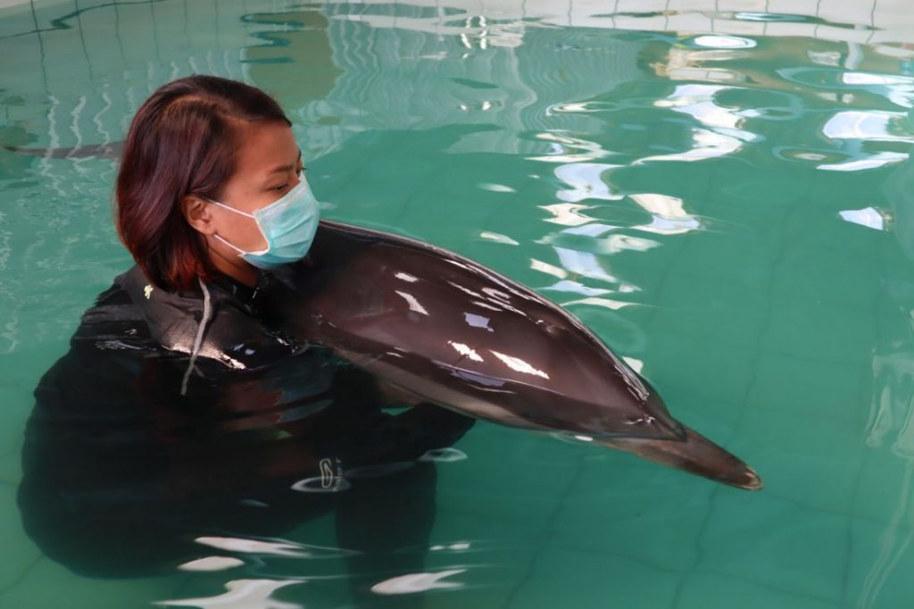Injured dolphin from Nai Yang Beach still in critical condition | News by The Thaiger