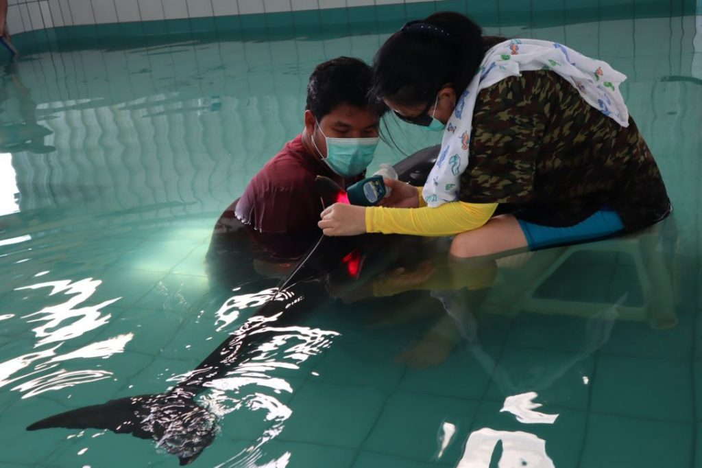 Injured dolphin from Nai Yang Beach still in critical condition | News by Thaiger