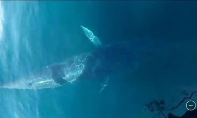 Big whale sighted off Phuket – VIDEO | The Thaiger