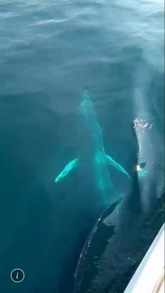 Big whale sighted off Phuket - VIDEO | News by The Thaiger