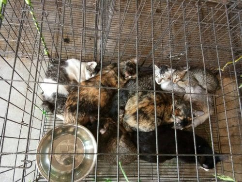 Hundreds of diseased cats & dogs living in Bangkok animal shelter | News by Thaiger