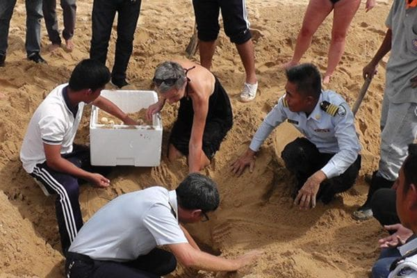 89 leatherback turtle eggs moved to safe area on beach | The Thaiger