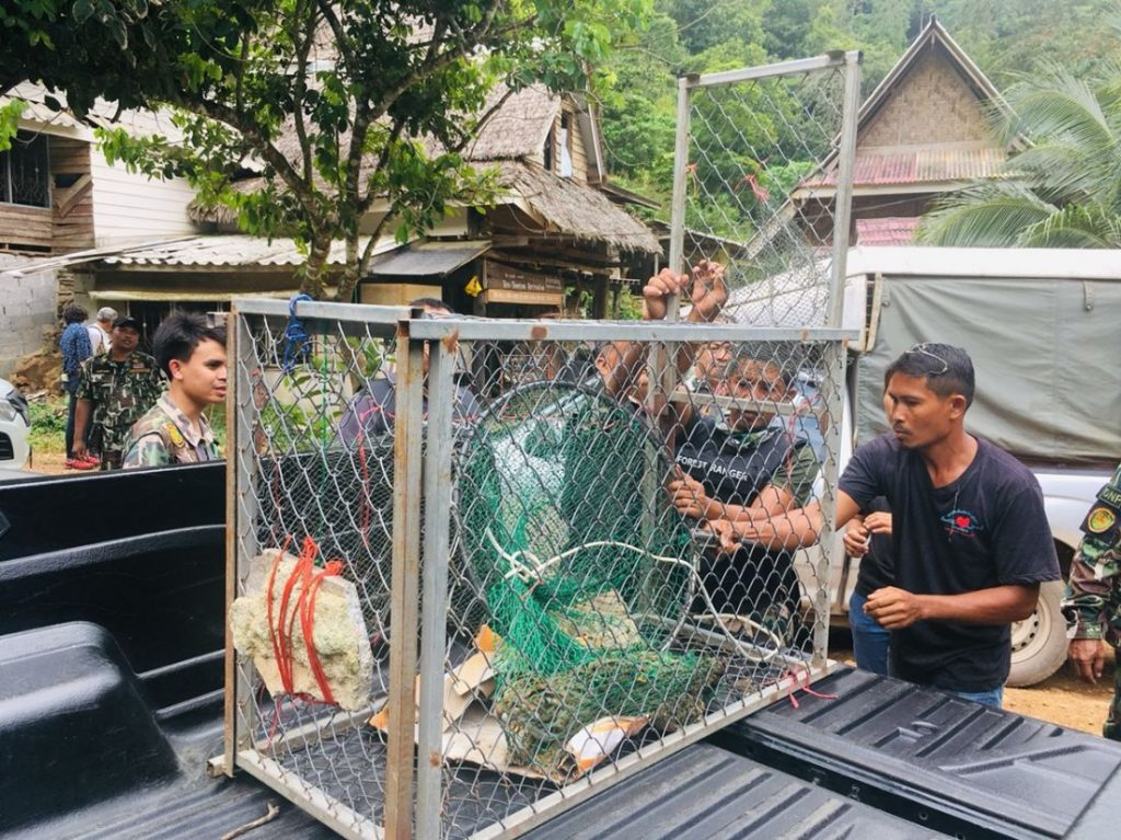 UPDATE: Man arrested for possessing exotic wild cats | News by The Thaiger