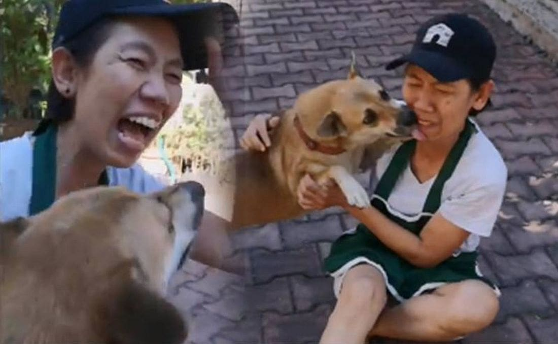 Social media helps re-unite dog and owner in Chiang Mai | The Thaiger