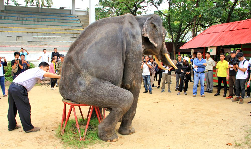 Samut Prakan zoo denies mistreatment of elephant | The Thaiger