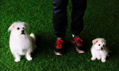 Dog cloning service in China starts at 1.8 million baht | Thaiger