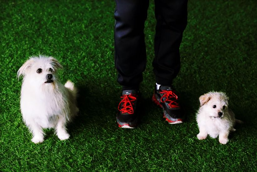 Dog cloning service in China starts at 1.8 million baht | The Thaiger