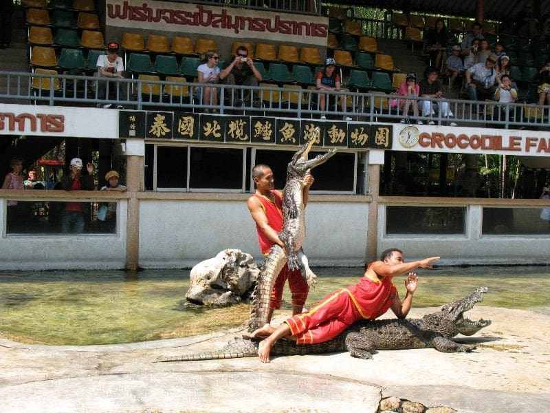 Tourists complain about thin elephant being forced to do party tricks | News by The Thaiger