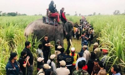 Elephants help search for missing Burmese boy | The Thaiger