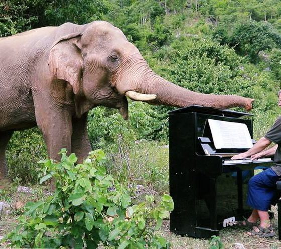 VIDEO: British pianist performs at Thai Elephant Sanctuary | The Thaiger