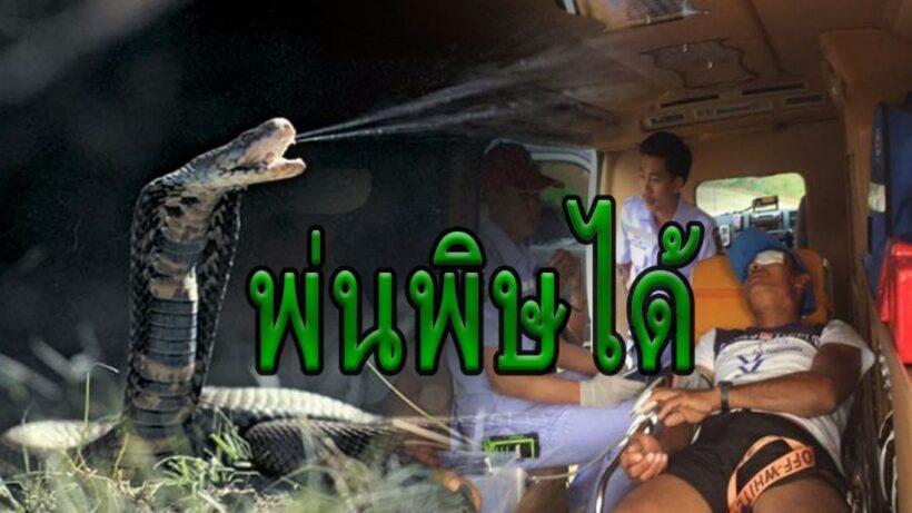 หนุ่มเมียนมาจับงูเห่า หวังทำกับแกล้ม โดนพ่นพิษใส่ตา   The Thaiger