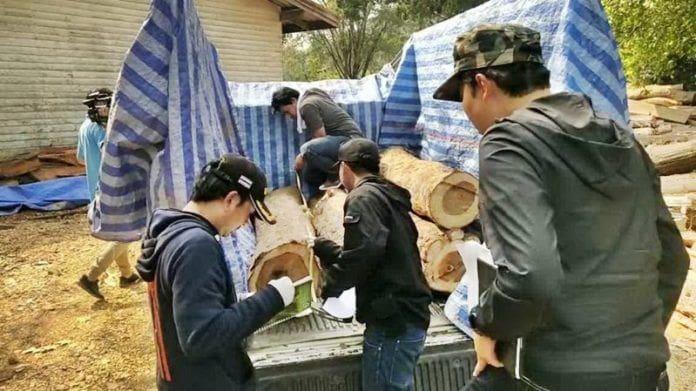 ไล่ออก 6 จนท.ป่าไม้แก่งหางแมว เซ่นเอี่ยวค้าไม้ จ่อฟันอาญา | News by The Thaiger
