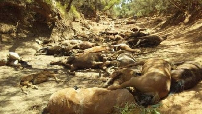 นรกบนดินมีจริง! ออสเตรเลียร้อนละทุ 43 องศา ม้าป่ากว่าร้อยตัวขาดน้ำตาย | News by The Thaiger