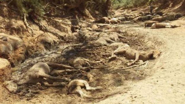 นรกบนดินมีจริง! ออสเตรเลียร้อนละทุ 43 องศา ม้าป่ากว่าร้อยตัวขาดน้ำตาย | The Thaiger