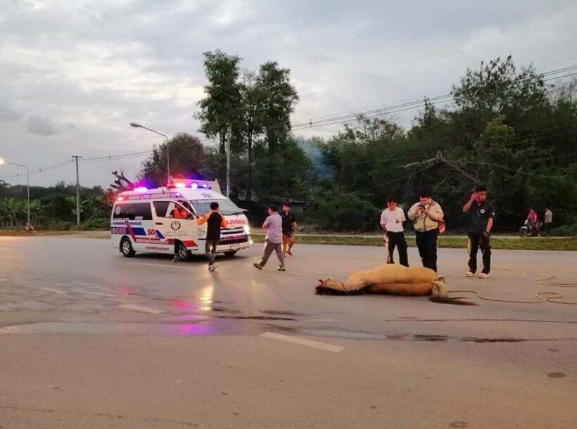 สลด! ม้าเมืองลำปางวิ่งตัดหน้ารถ โดนชนตายคาที่ | News by The Thaiger