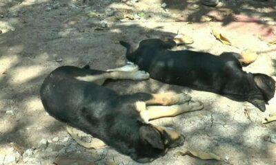 คนใจเหี้ยม ลอบวางยาเบื่อหมาทั้งหมู่บ้าน | The Thaiger