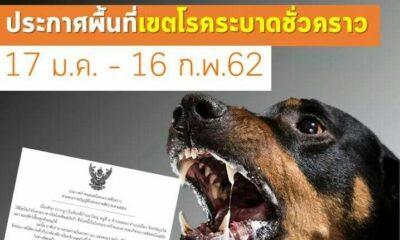 ภูเก็ต ประกาศกำหนดเขตโรคระบาดชั่วคราว! หลังพบสุนัขติดเชื้อพิษสุนัขบ้า | The Thaiger