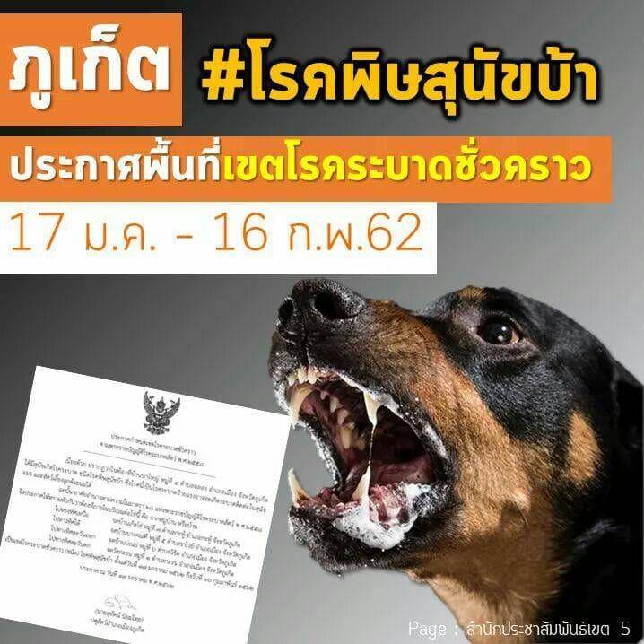 ซอยด๊อกร่วมมือปศุสัตว์ฯภูเก็ต หลังพบสุนัขติดเชื้อพิษสุนัขบ้า ในต.ฉลอง | The Thaiger