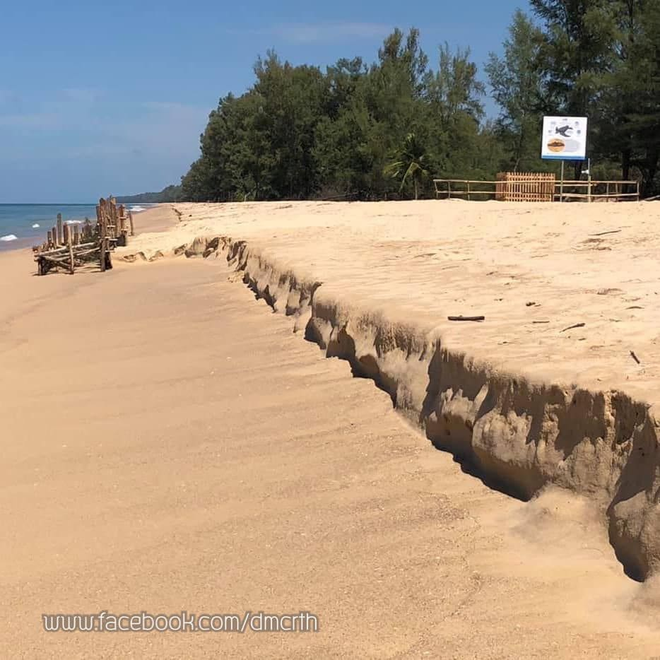 Leather back turtle egg nest on Phang Nga beach safe after Pabuk | The Thaiger