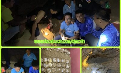 More sea turtle eggs found on Phang Nga Beach | The Thaiger
