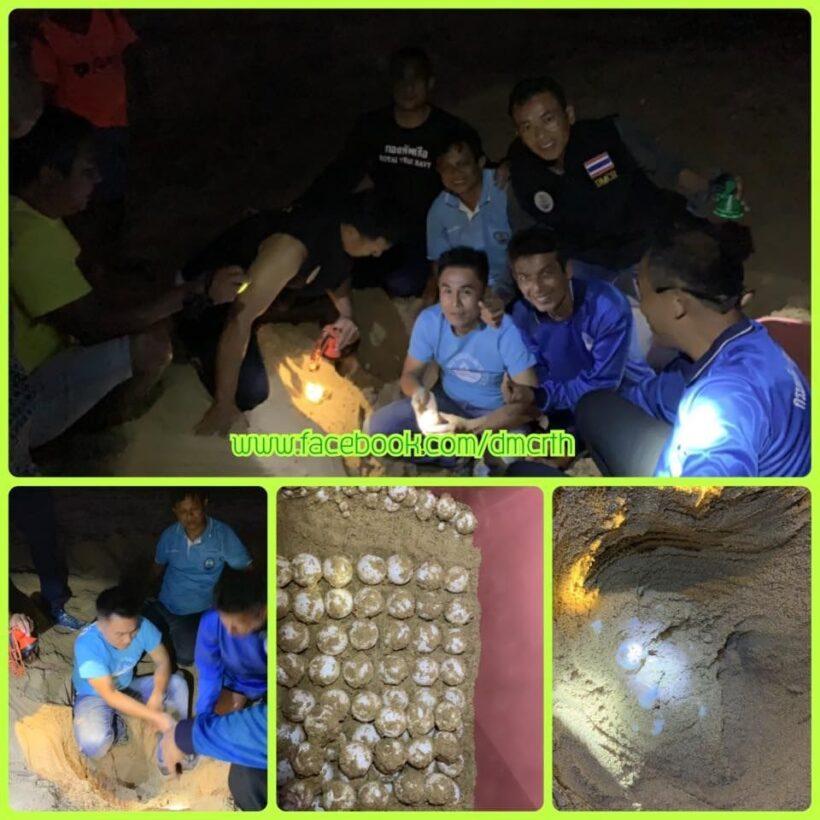 More sea turtle eggs found on Phang Nga Beach | The Thaiger