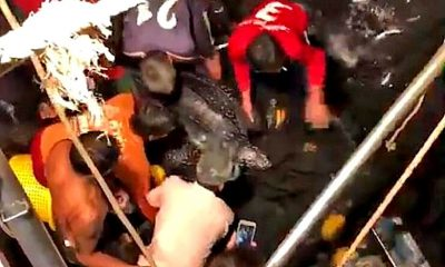 Big leatherback sea turtle rescued after getting stuck in fishing net – VIDEO | The Thaiger