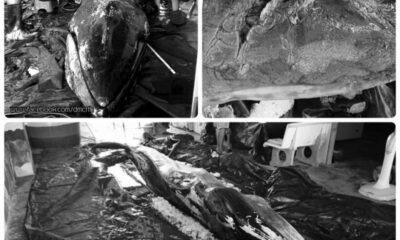Omura whale found dead on Chumphon beach | The Thaiger