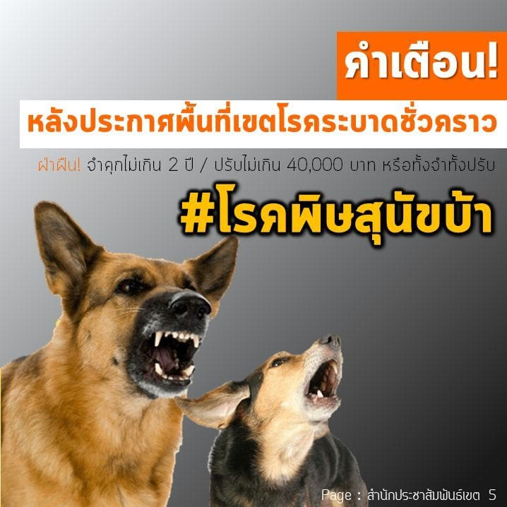 Phuket declares rabies outbreak zone in Chalong | News by Thaiger
