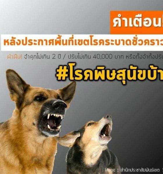 เจ้าของสัตว์ต้องทำอย่างไร? เมื่อได้ประกาศว่ามีโรคระบาดพิษสุนัขบ้าแล้ว | The Thaiger