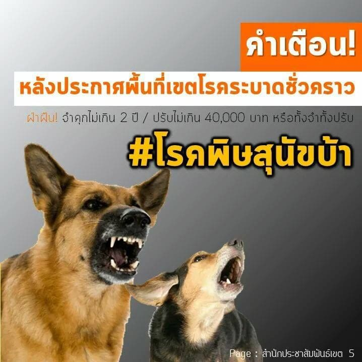 ซอยด๊อกร่วมมือปศุสัตว์ฯภูเก็ต หลังพบสุนัขติดเชื้อพิษสุนัขบ้า ในต.ฉลอง   News by The Thaiger