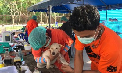Soi Dog's mobile clinic continues in Phuket, starting in Rawai | The Thaiger