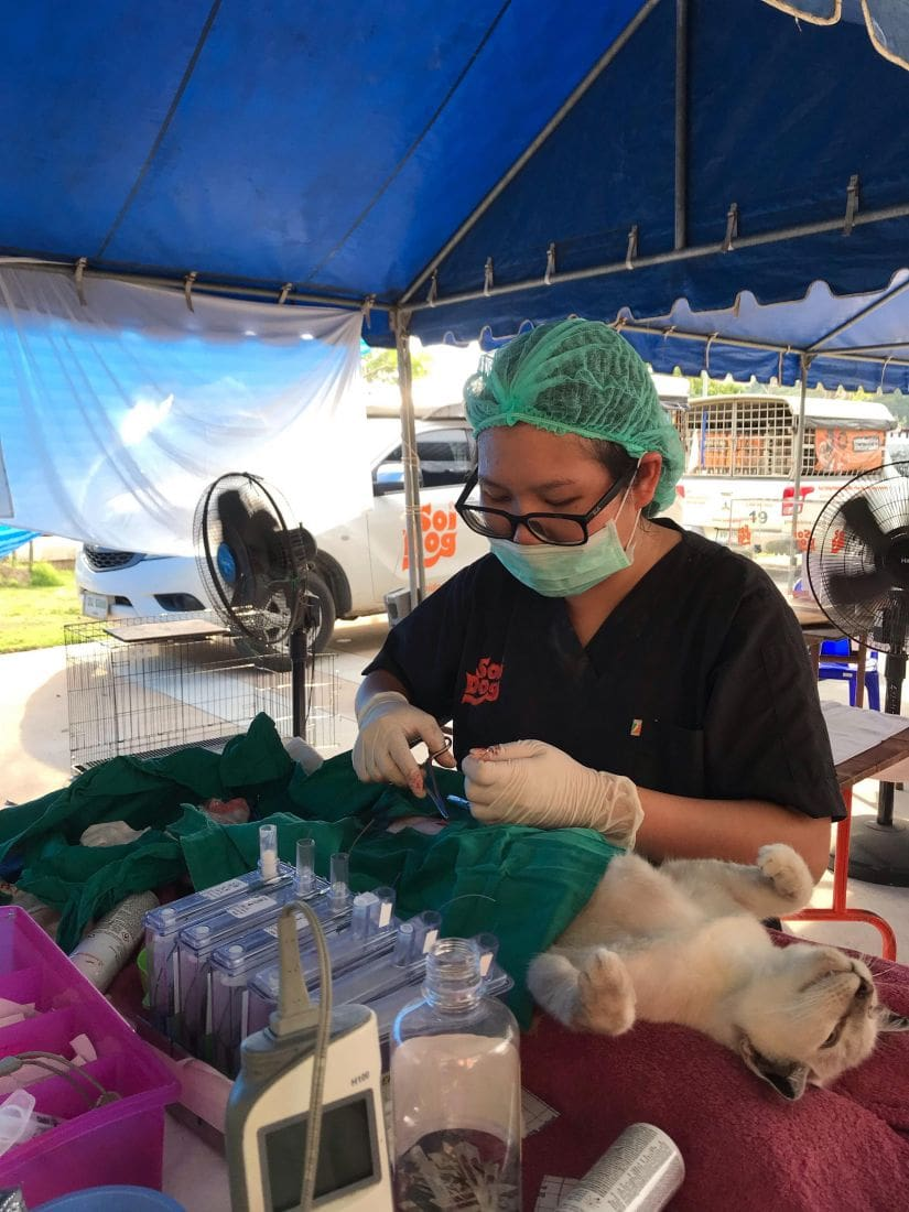Soi Dog's mobile clinic continues in Phuket, starting in Rawai   News by The Thaiger