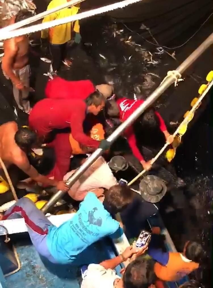 Big leatherback sea turtle rescued after getting stuck in fishing net - VIDEO   News by Thaiger