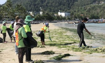 Seaweed on Patong Beach – just a seasonal phenomenon | The Thaiger