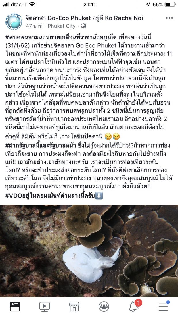 Conservationists call for the protection of Guitarfish and Electric rays | News by Thaiger