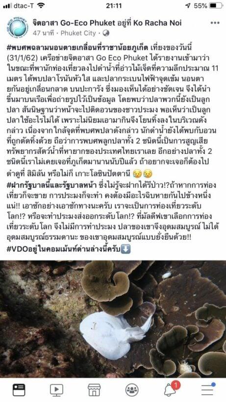 จิตอาสา Go-Eco Phuket ร้องรัฐบาล หลังพบซากปลาโรนันและปลากระเบนไฟฟ้านอนตายเกลื่อนบนปะการัง เกาะราชาน้อย | News by The Thaiger