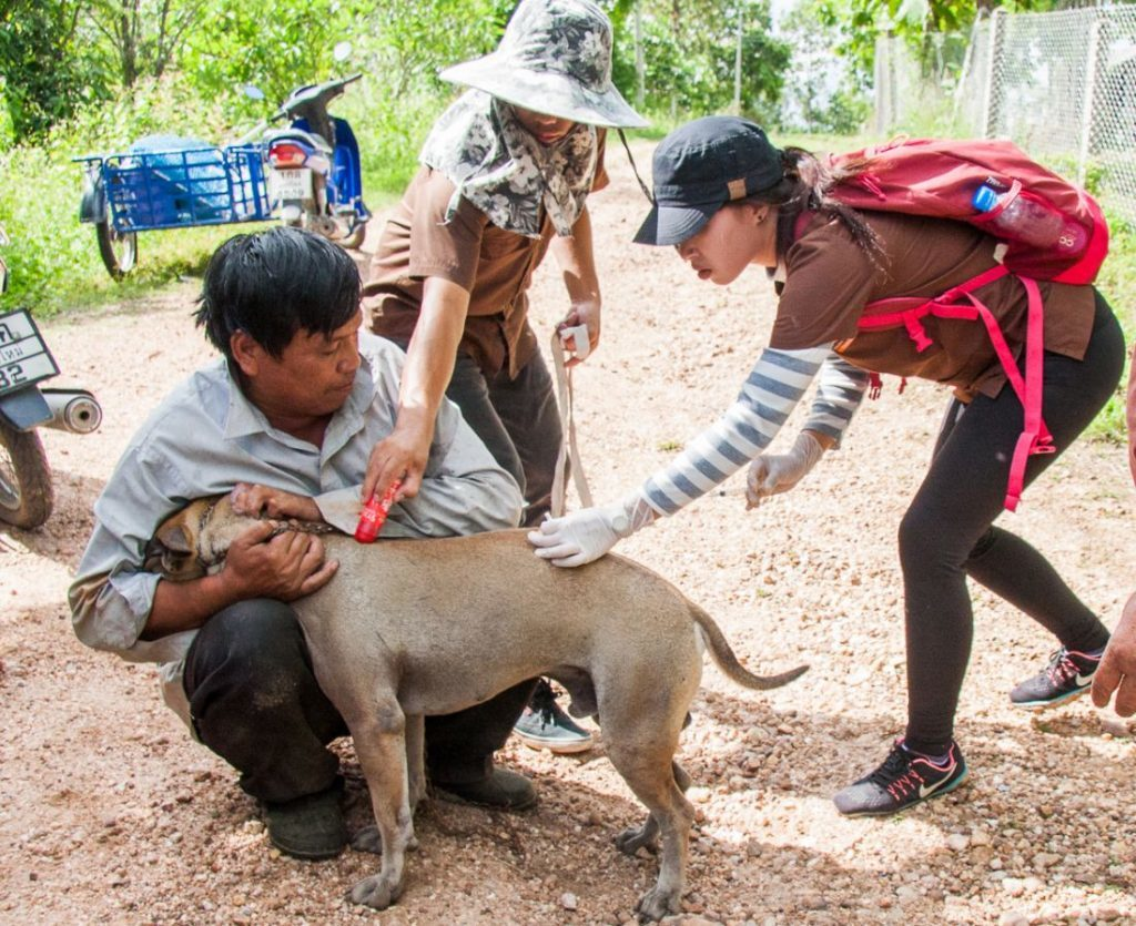 Soi Dog Foundation responds to Rabies outbreak zone in Chalong | News by The Thaiger