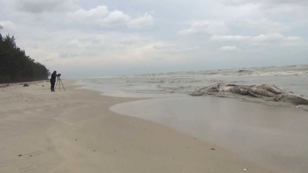 Dead whale washed up on Nakhon Si Thammarat coast | News by Thaiger