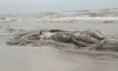 Dead whale washed up on Nakhon Si Thammarat coast | The Thaiger
