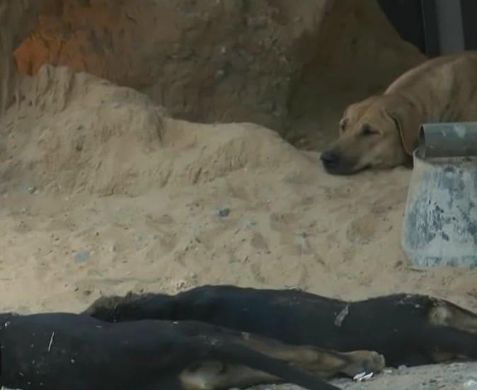 คนใจเหี้ยม ลอบวางยาเบื่อหมาทั้งหมู่บ้าน | News by The Thaiger