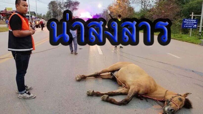 สลด! ม้าเมืองลำปางวิ่งตัดหน้ารถ โดนชนตายคาที่ | The Thaiger