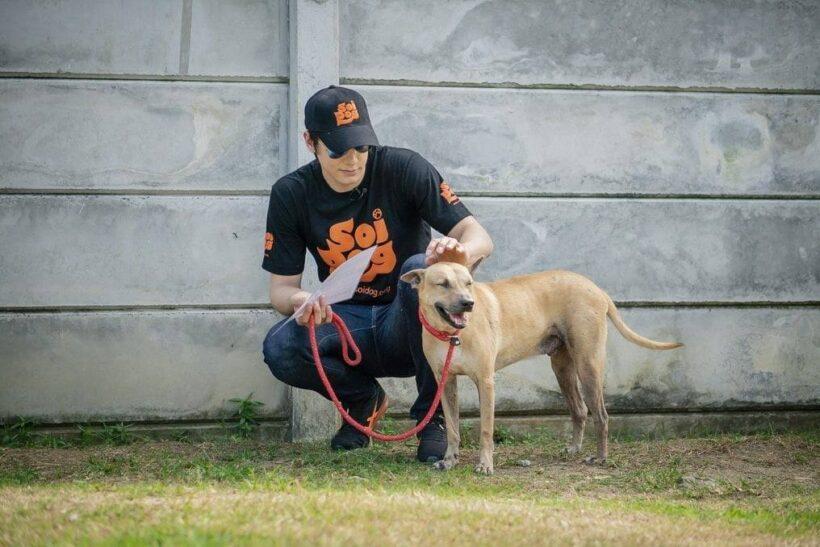 พระเอกหัวใจรักสัตว์ 'ปีเตอร์ เดนแมน' เยี่ยมชมซอยด๊อก จ.ภูเก็ต | News by The Thaiger