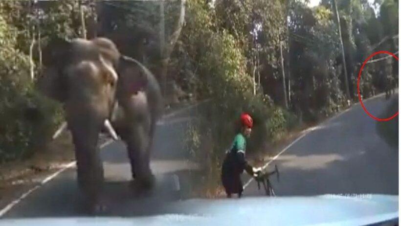 คลิปช้างป่าเขาใหญ่วิ่งใส่หนุ่มนักปั่น แบกจักรยานวิ่งหนีสุดชีวิต   The Thaiger