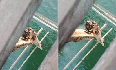 ไฟเกือบไหม้ สิงห์อมควัน ทิ้งก้นบุหรี่ ติดเสาสะพานมอญ โชคดีดับทัน | The Thaiger