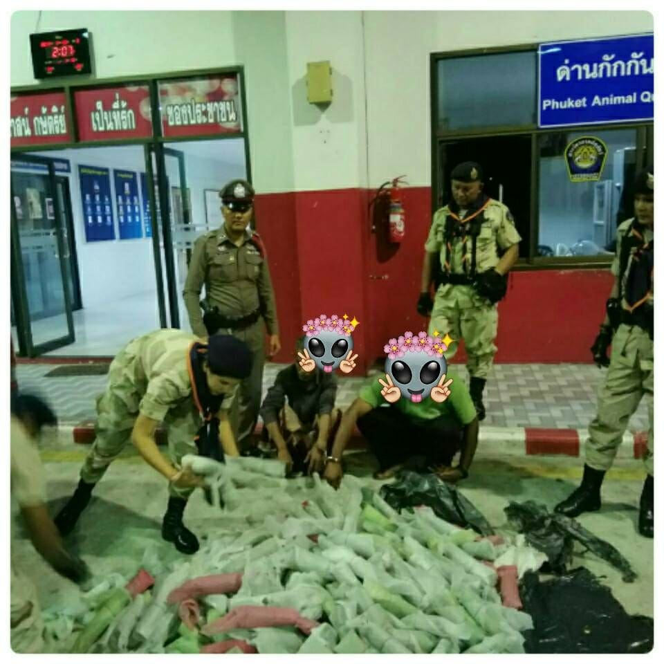 Two arrested with 100 kilograms of kratom in Phuket | News by The Thaiger