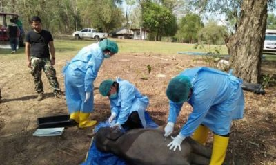 Young elephant found dead with plastic in intestines – Chachoengsao | The Thaiger