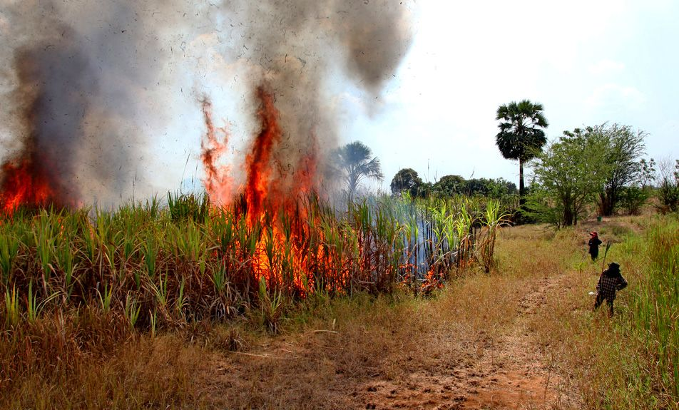 Air pollution: Cabinet asked to allocate 6 billion baht to help buy sugarcane harvesters | The Thaiger