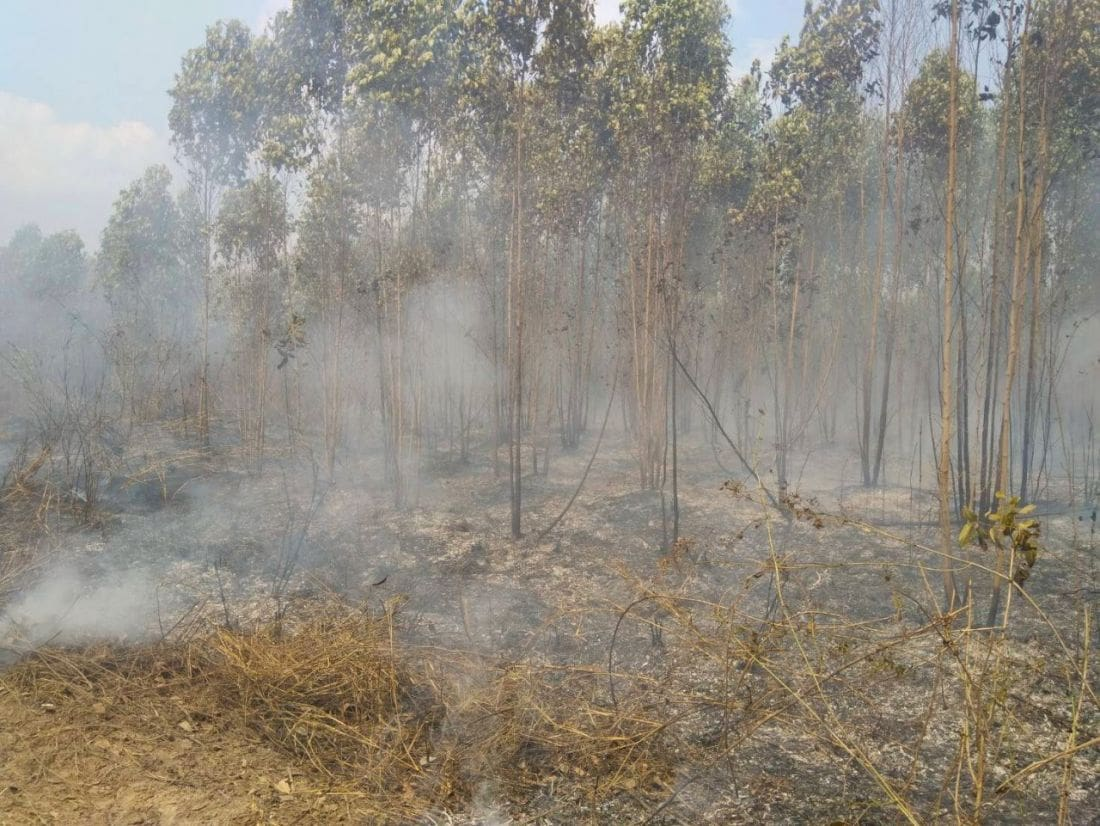 Chacheongsao rubber plantation fire under control after 15 hours | News by Thaiger