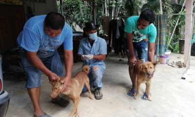 Another dog tests positive for rabies in Krabi | The Thaiger