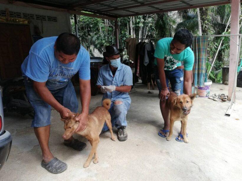 พิษสุนัขบ้า ยังระบาดรุนแรงที่กระบี่ ปศุสัตว์ประกาศเขตระบาดเพิ่มอีก 1 หมู่บ้าน | The Thaiger